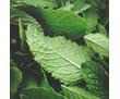 варенье из мяты домашнее, фото — «Реклама Белогорска»