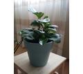 Продам цветы в отличном состоянии - Комнатные растения в Севастополе