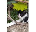 Котята в добрые руки 1,5 месяца - Отдам в добрые руки в Севастополе