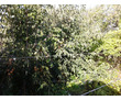 Продам отличный участок 5 соток на Фиоленте, р-н Горбатый мост, фото — «Реклама Севастополя»