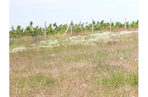 Продам в Крыму в Бахчисарайском районе.  80 га земли сельскохозяйственного назначения., фото — «Реклама Бахчисарая»
