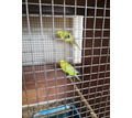 Продажа птиц - Птицы в Севастополе