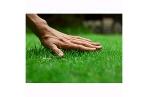 Продам семена газонных трав Севастополь. Семена для газона., фото — «Реклама Севастополя»