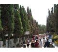 Помещение в аренду на Кипарисовой аллее - Сдам в Судаке