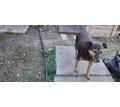 Пропала собака - Собаки в Крыму