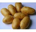 Продам картофель. - Эко-продукты, фрукты, овощи в Джанкое