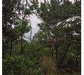 Земельный участок в Крыму - Участки в Алупке