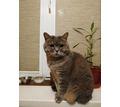 Пропала кошка - Бюро находок в Севастополе