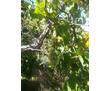 Дача в СТ водоканал 2, фото — «Реклама Севастополя»