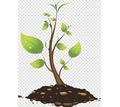 Продам саженцы. Осень 2020 - Саженцы, растения в Красногвардейском