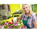 Требуется садовник (частичная занятость) - Частичная занятость в Севастополе