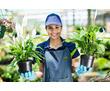Срочно требуется садовник/ца, фото — «Реклама Севастополя»