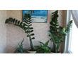 Продаются комнатные растения, фото — «Реклама Севастополя»
