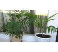 Продаются комнатные растения - Саженцы, растения в Севастополе