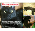 прошу помощи в поиске кота - Бюро находок в Севастополе