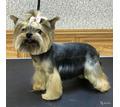 Стрижка, тримминг собак всех пород - Груминг-стрижки в Симферополе