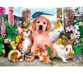 Служба заботы домашним животным - Дрессировка, передержка в Севастополе