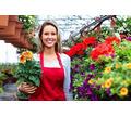 Садовник/ца (частичная занятость) - Сервис и быт / домашний персонал в Севастополе