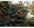 Семейные номера. Отдых с детьми в Феодосии, Береговое. Песчаный пляж 300м, фото — «Реклама Феодосии»