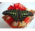 Тропические бабочки - живая валентинка в день всех влюбленных - Свадьбы, торжества в Симферополе
