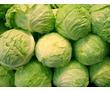 Овощехранилища,фруктохранилища,камеры хранения.Оборудование,монтаж,сервис., фото — «Реклама Красногвардейского»