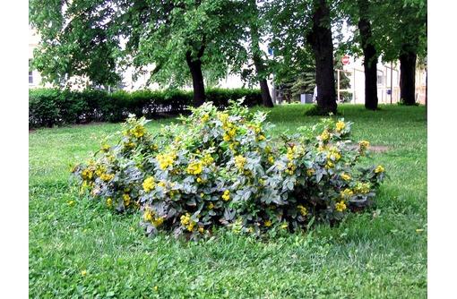 Озеленение придомовой территории, фото — «Реклама Севастополя»