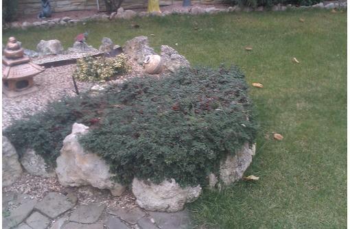 Услуги садовника на вашем участке., фото — «Реклама Севастополя»
