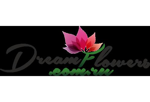Dreamflowers.com.ru Доставка цветов и подарков в Севастополе