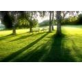 Спил деревьев, покос травы, вспашка мотоблоком - Ландшафтный дизайн в Краснодаре