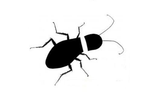 Дезинсекция. Уничтожение тараканов быстро и качественно, фото — «Реклама Краснодара»