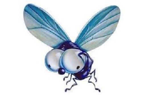 Дезинсекция. Уничтожение мух быстро и качественно, фото — «Реклама Краснодара»