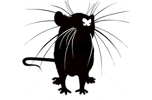 Дератизация. Уничтожение крыс быстро и качественно, фото — «Реклама Краснодара»