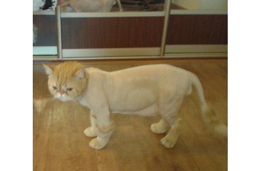Стрижка, расчесывание, подстригание когтей у кошек и собак, фото — «Реклама Краснодара»