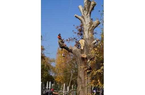 Спилить дерево Краснодар., фото — «Реклама Краснодара»