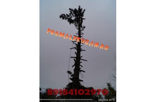 Спил деревьев Краснодар, не дорого Гарантия целостности окружающих объектов., фото — «Реклама Краснодара»