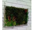 Вечно живые, цветы, растения, картины из экзотических растений - Дизайн интерьеров в Краснодаре