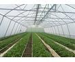Продам тепличное хозяйство 7 Га., фото — «Реклама Тимашевска»