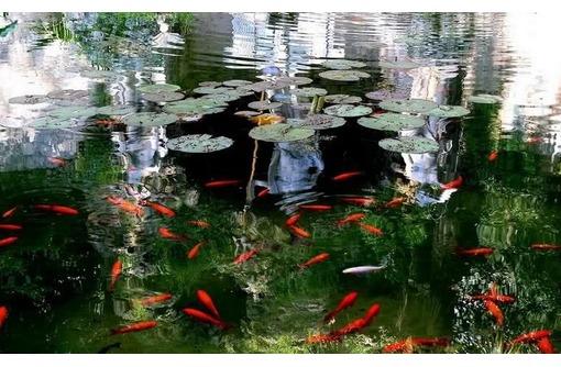 Биопрепарат для септиков, выгребных ям, очистки стоков и водоемов, фото — «Реклама Новороссийска»