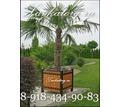 Кашпо уличные из дерева на металлокаркасе с оцинкованным посадочным контейнером КМл-2 - Садовая мебель и декор в Сочи