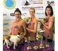 Профессиональные стрижки собак и кошек в Новороссийске. - Груминг-стрижки в Кубани