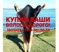 Куплю волосы в Белореченске ДОРОГО!!! - Парикмахерские услуги в Кубани