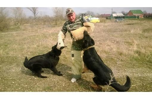 Дрессировка собак всех пород постановка на охрану, фото — «Реклама Гулькевичей»