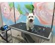 Салон стрижки собак и кошек в Кудепсте, фото — «Реклама Адлера»