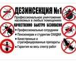 уничтожение   ВРЕДИТЕЛЕЙ! АНАПА!, фото — «Реклама Анапы»