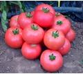 Thumb_big_pink-tomato