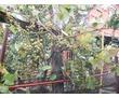 Продам полдома в центре города Лабинск, фото — «Реклама Лабинска»