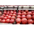Продаем помидоры оптом в краснодарском крае, помидор оптом краснодарский - Эко-продукты, фрукты, овощи в Кубани