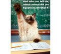 Thumb_big_funny-cats-in-school