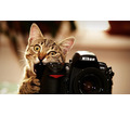 Thumb_big_animals___cats_cat_chews_nikon_camera_098119_