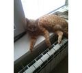 Потерялся рыжий  кот,  звать РЫЖИК 6 лет - Бюро находок в Краснодаре